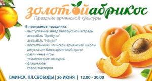 абрикос1